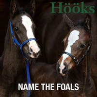 NAME THE FOALS!